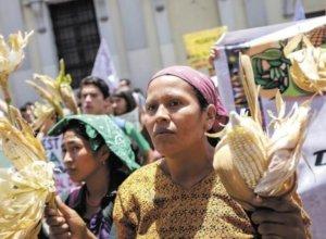 International science denial: Top-5 activist groups spreading anti-GMO myths in Latin America