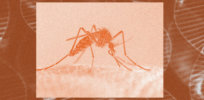 Genetically-engineered mosquitoes set for release in Florida Keys: Science offers tool to fight Zika, dengue, malaria but critics claim it's unnecessary and potentially dangerous