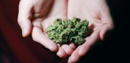 1/3 of American adults can now legally smoke marijuana. Here is how weed affects your brain and body, for good and bad