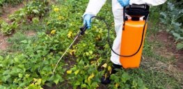 Fighting cancer in humans has opened doors to controlling chemical resistance in weeds