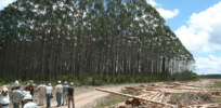 Global warming causing eucalyptus trees, used for lumber, to invade native ecosystems. CRISPR gene editing could prevent that