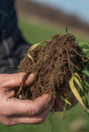 How important is soil quality to addressing climate change and soil quality? It's critical, and here's a blueprint for refocusing American R&D