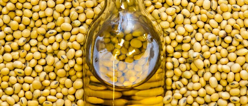 Gene-edited soybeans are used to make healthier soybean oil.