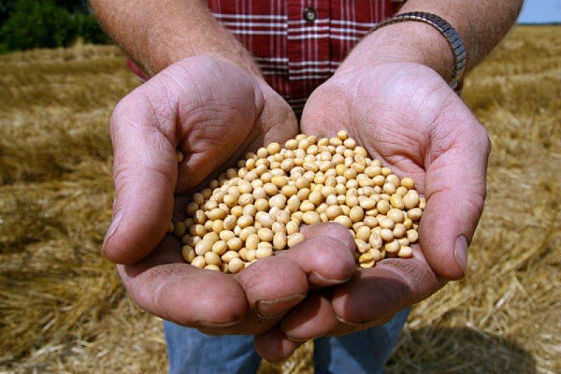 Monsanto Supreme Court Seed Dispute