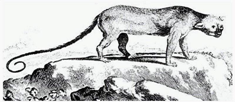 Poto mystery Jamaican mammal possibly Xenothrix