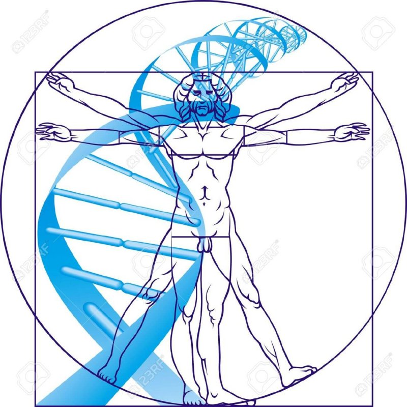 Leonardo da Vinci man and DNA on the white background Stock Vector