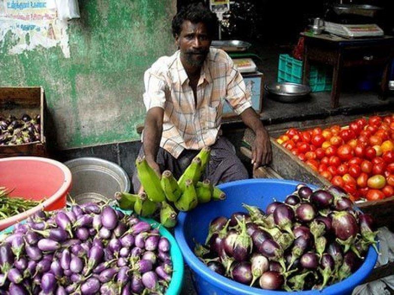 india eggplant market
