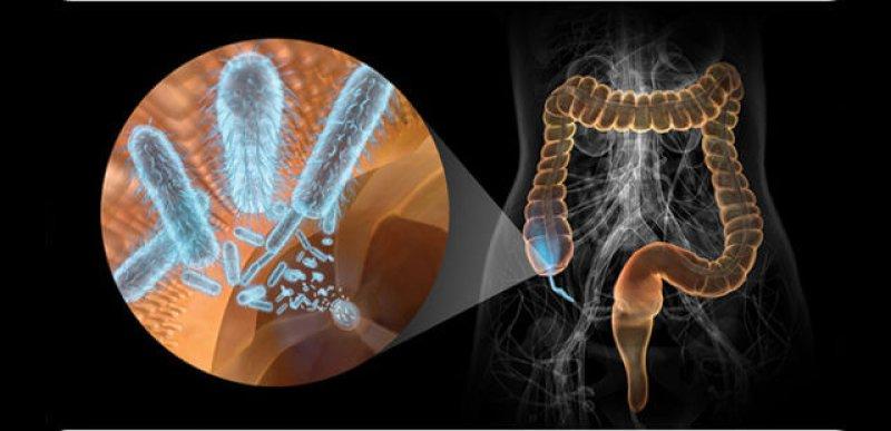 gmo farming and food creates gut flora imbalance bacteria
