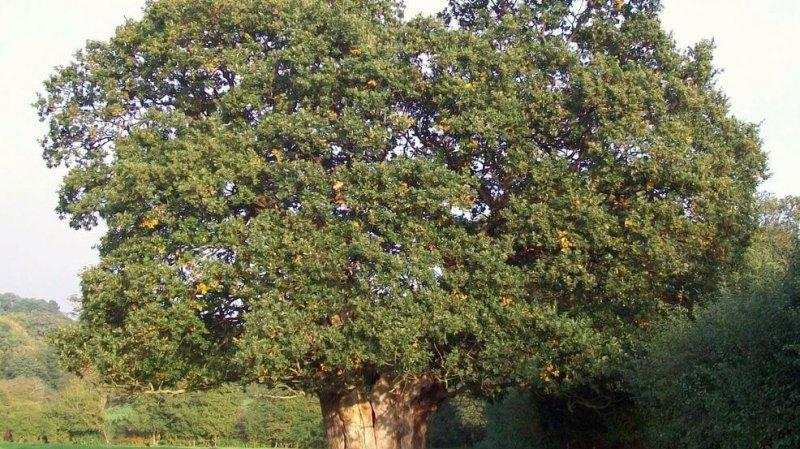 c cbc c c aee adf c cdb large x oaktree