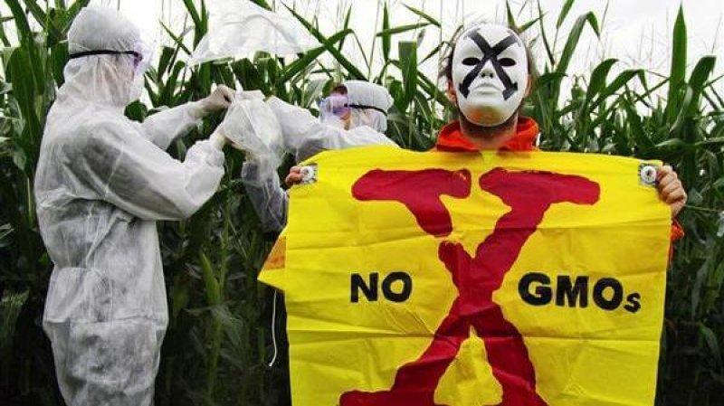 GMO x