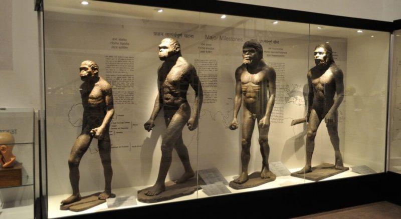 Human Evolution Biswarup Ganguly Wikimedia Commons x