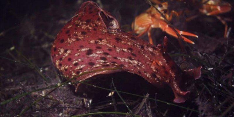 Snail memory transplant x