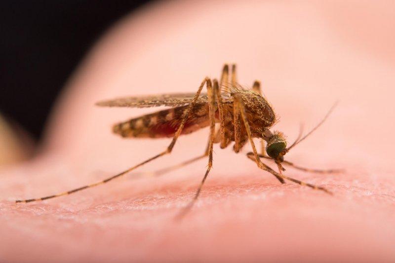 mosquito NationalGeographic