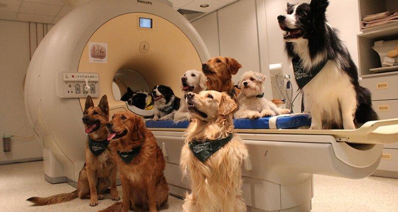 lh dog brain main new free