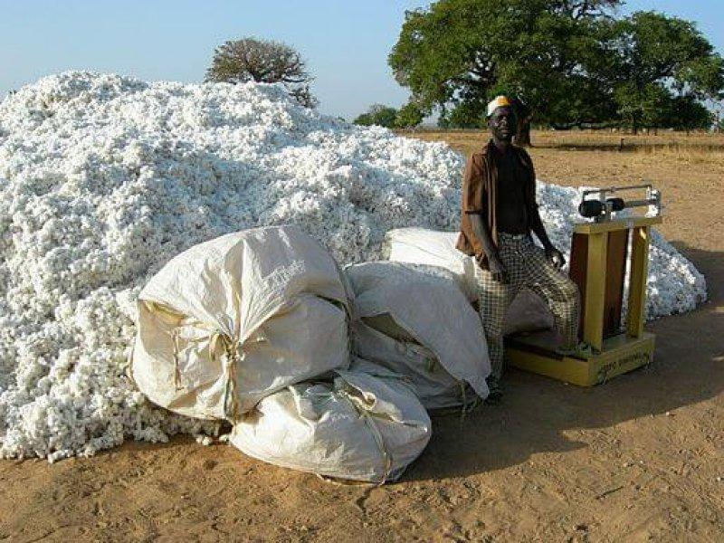 px Dourtenga cotton harvest
