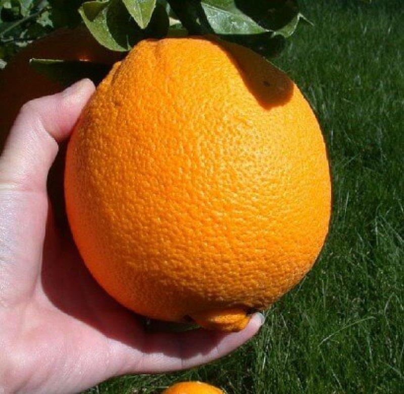 px Picking an orange e