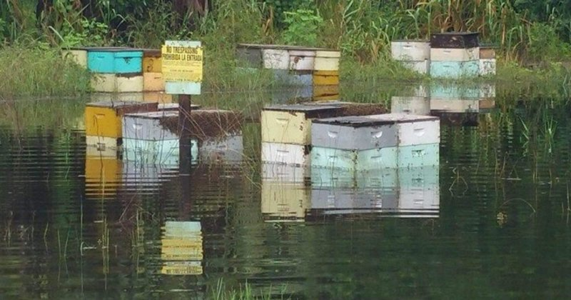 flooded hives