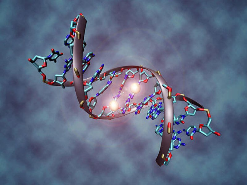 px DNA methylation