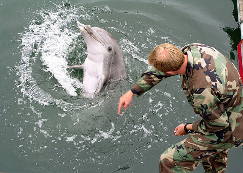 px Military trained dolphin