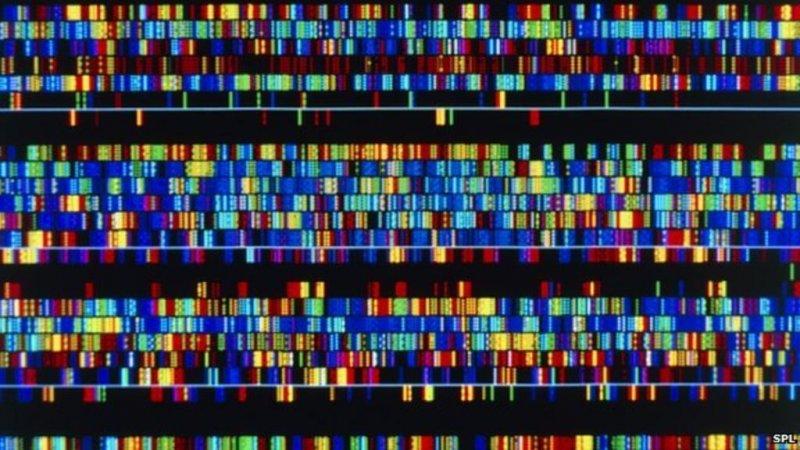 g human dna sequence spl