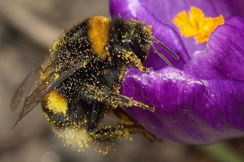 px Bumblebee