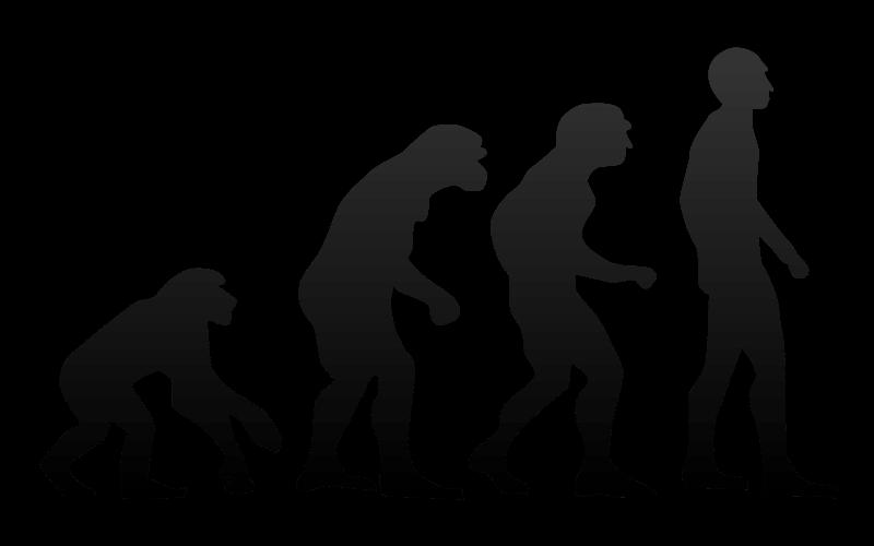 px Human evolution