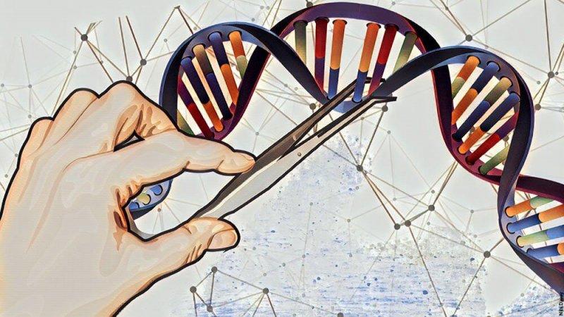 A MAIN genes
