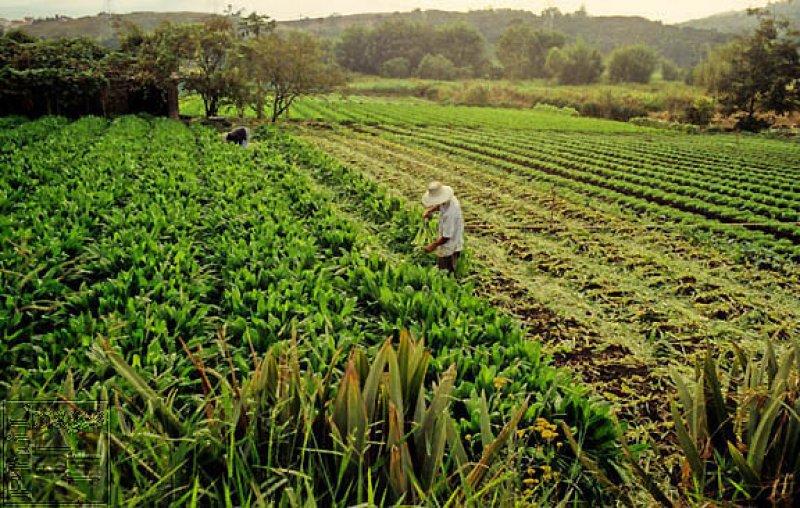 BRA Brazilian Farmers