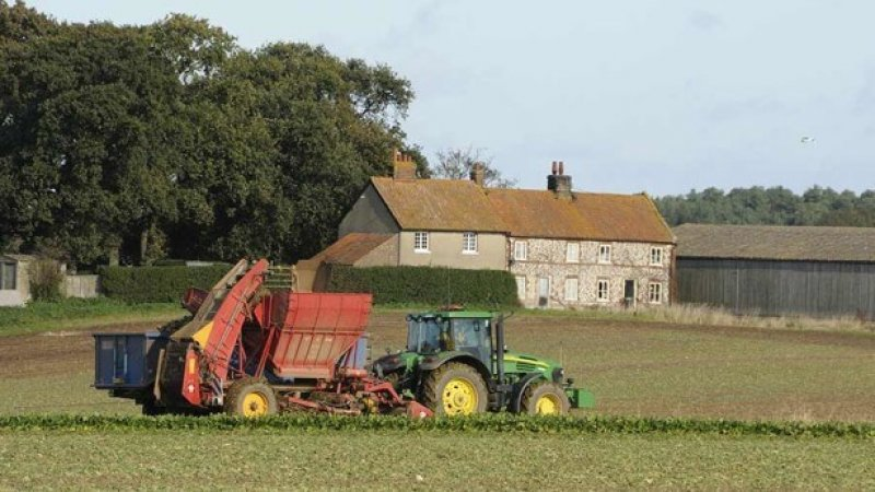 Beet harvester working in front of farm cottages x
