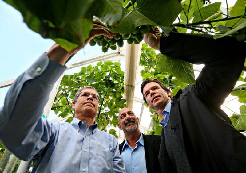 Biofueljp articleLarge