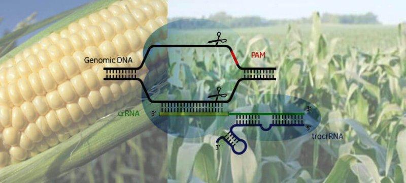 CRISPR x e