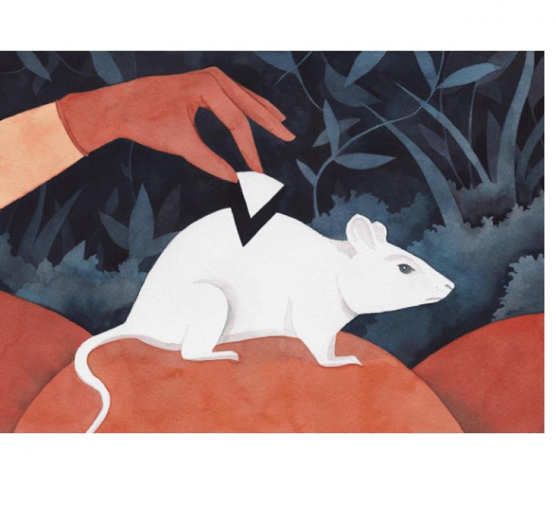 CRISPR rat