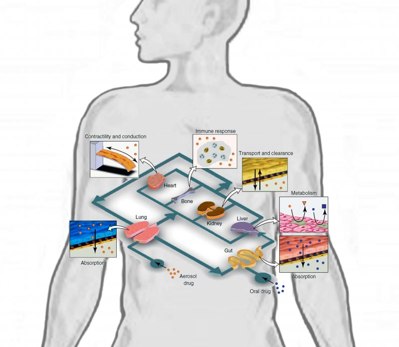Conceptual Schematic of a Human on a Chip