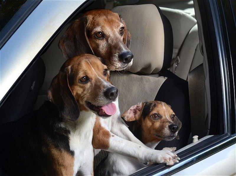 Dogsincars pocket b