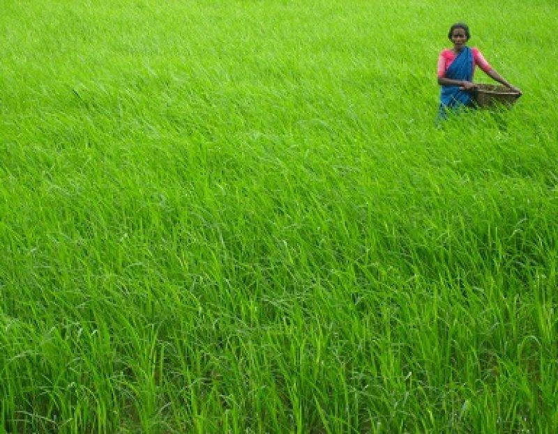 Farm Life Village India