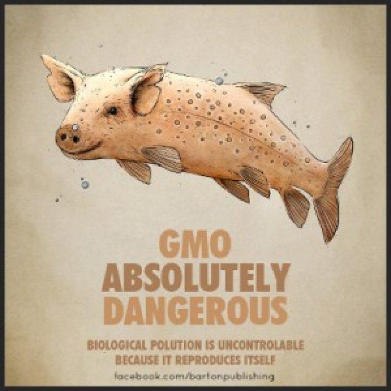 GMO Absolutely Dangerous FB BP x