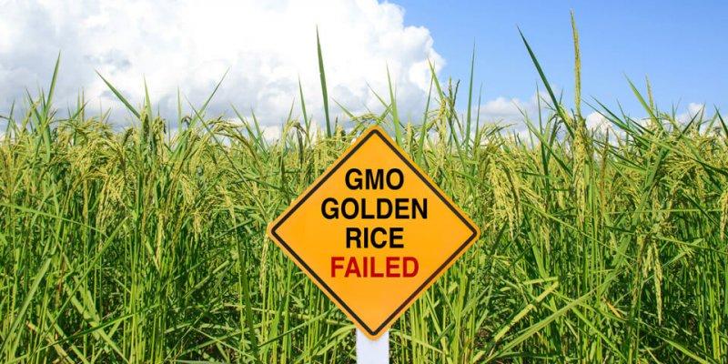 GMO Golden Rice Failed sign x