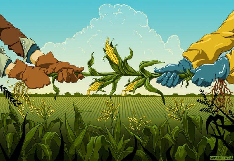 GMO WEB