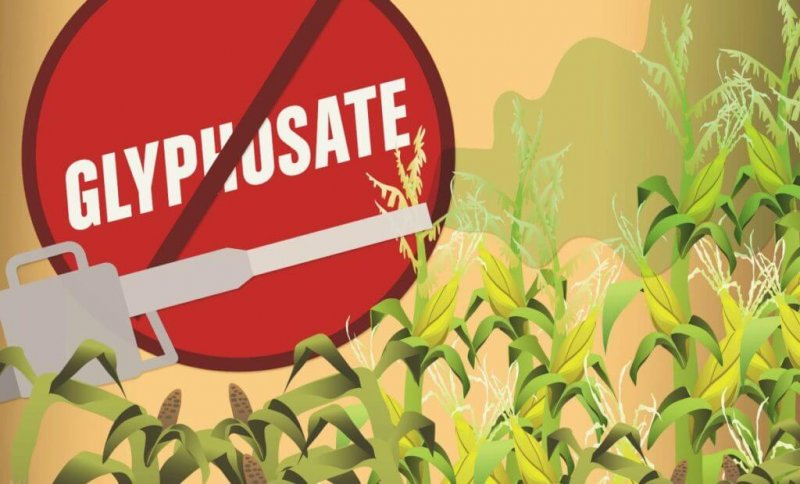 Glyphosate x