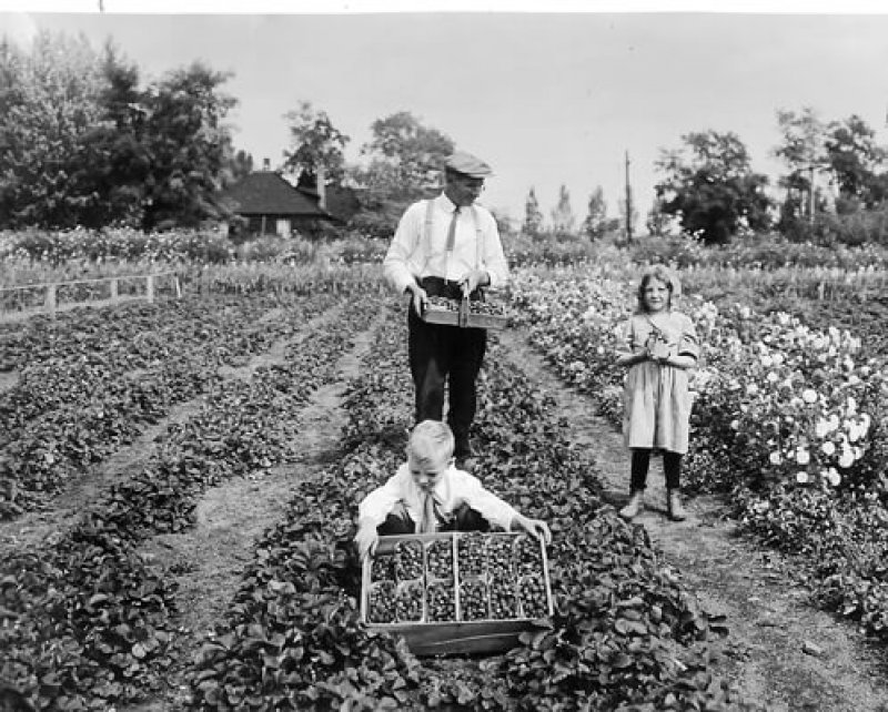 JD Elizabeth Ev strawberries courtesy Longs Gardens