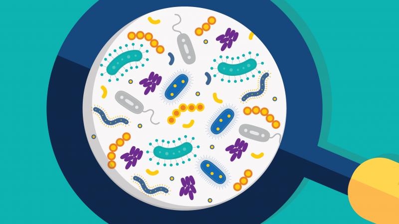Microbiome FINAL