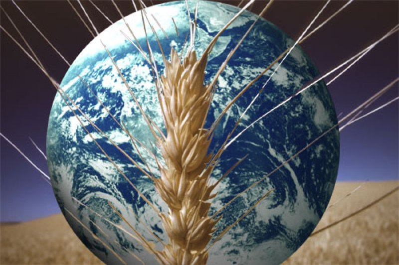 Morocco Center Of The Strategy For The Global Food Security