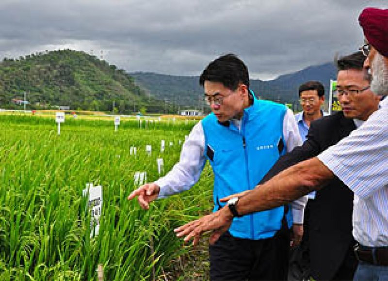 OPINION Biotech Crops Provide Food Security In Southeast Asia