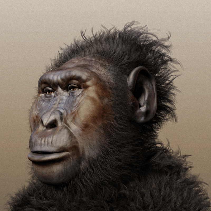Paranthropus boisei forensic facial reconstruction
