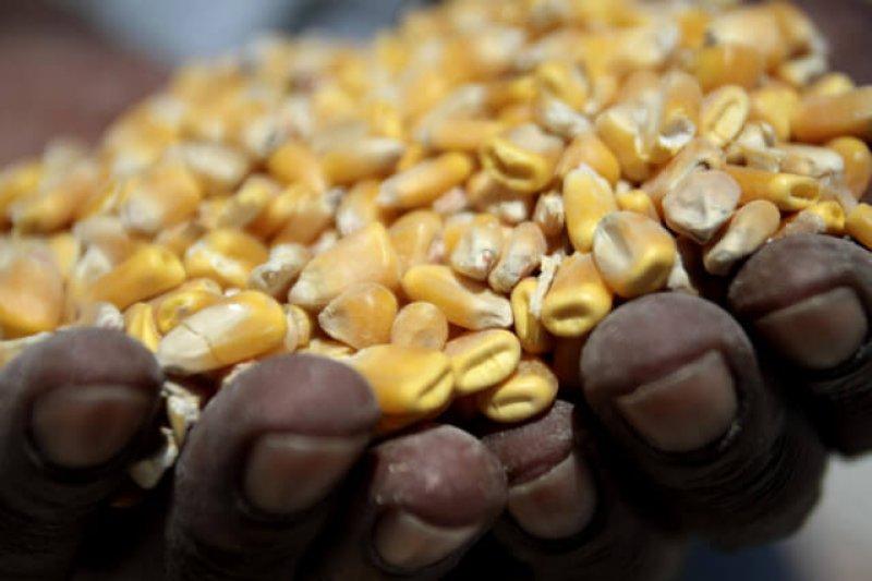 SA corn