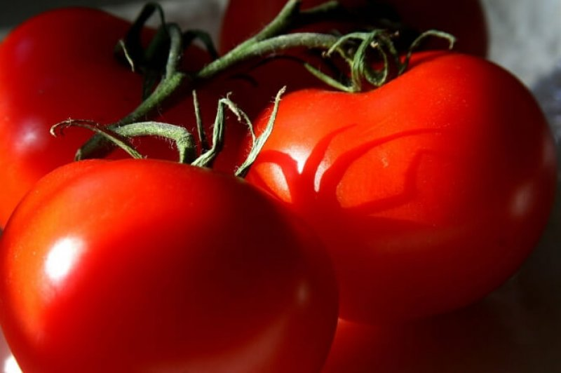 Tomatoes articleimage