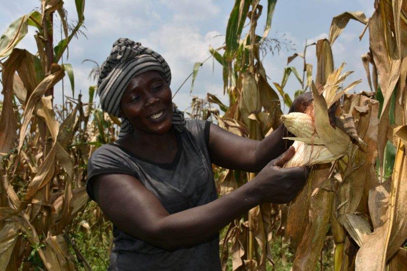 Ugandan farmer Alinda Sarah. Credit: Joshua Masinde/CIMMYT