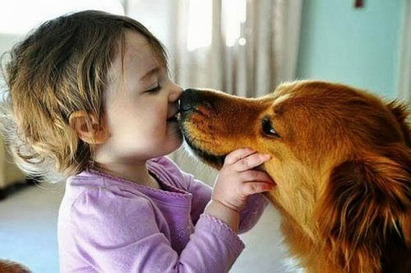 animals and humans being too cute jVsCq