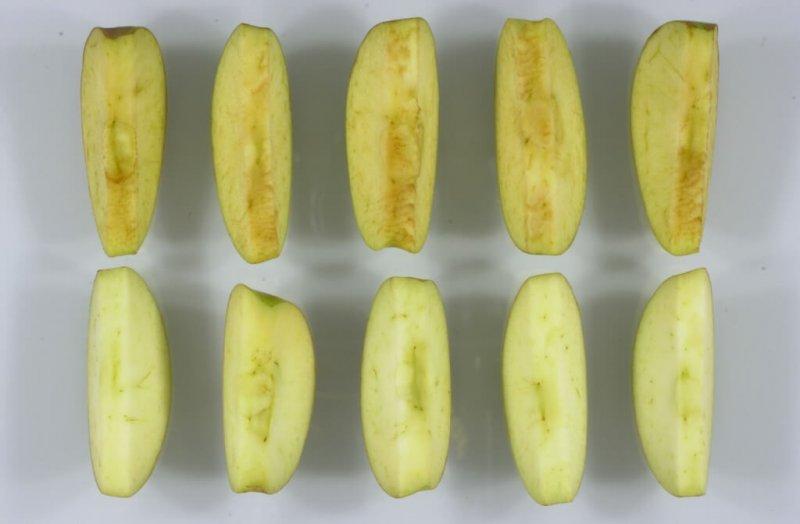 apple slices x