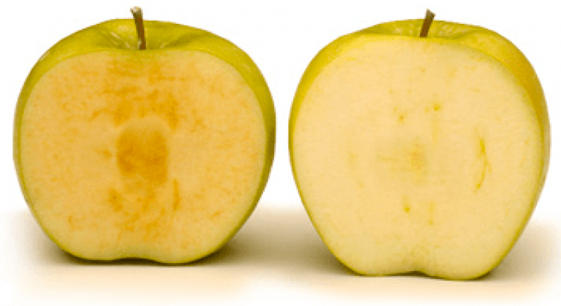 arctic vs regular apple